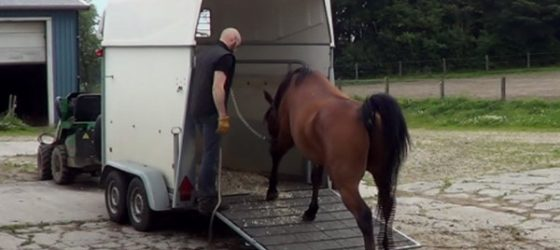 How to load a horse?