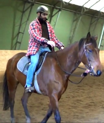 Jambo: the Swedish Warmblood that bore my first mistakes and missteps... and taught me horsemanship!