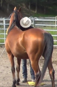 elixir-horse-human-relationship-peace-relaxation-tenderness