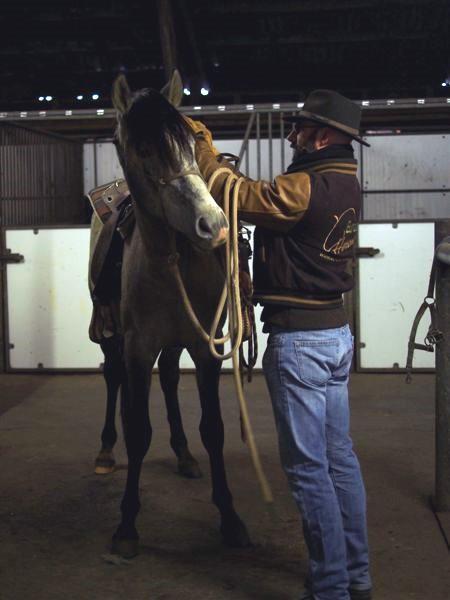 Équipement : choisissez correctement votre matériel d'équitation et d'entraînement