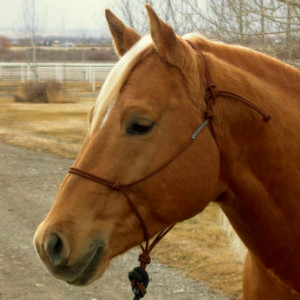 Equipment - Double Diamond rope halter is a gentle design.