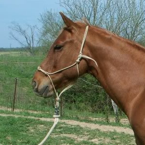 Equipment - Clinton Anderson's rope halter is designed with extra knots.