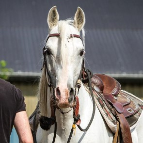 Humilité, patience et empathie sont des qualités pour travailler avec les chevaux