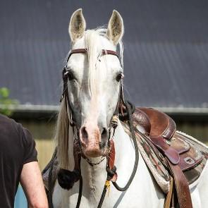 perm-empathy-is-a-key-to-good-horsemanship