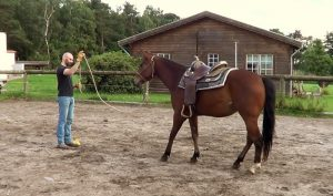Horsemanship program: backing up is a fundamental to teach respect to a horse