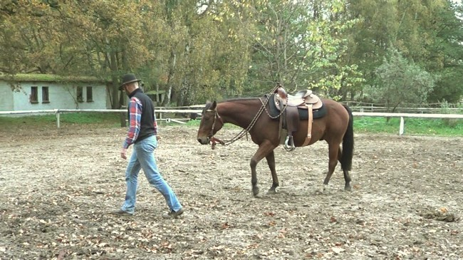 Natural Horsemanship: a horse who trusts you will follow you everywhere