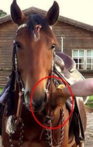 Horsemanship groundwork exercises - position of the hand holding the slobber strap