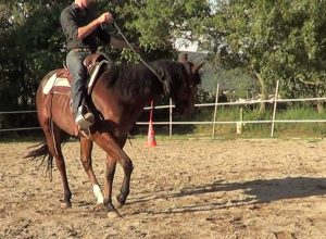 Natural Horsemanship: release the rein as soon as the horse crosses the front legs