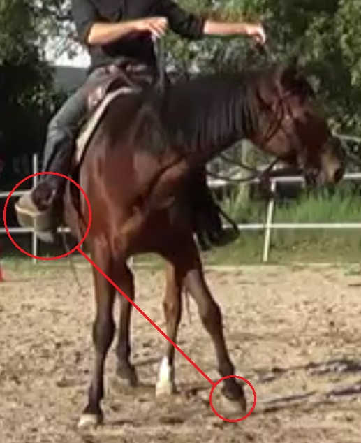Natural Horsemanship: position your legs and your hands to move in harmony with your horse