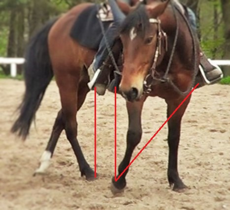 Natural Horsemanship: position your legs and pick your rein in order to turn with your horse