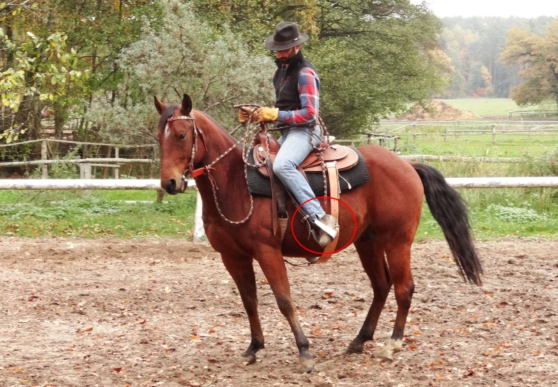Natural Horsemanship: untracking the hind legs to educate a horse to think