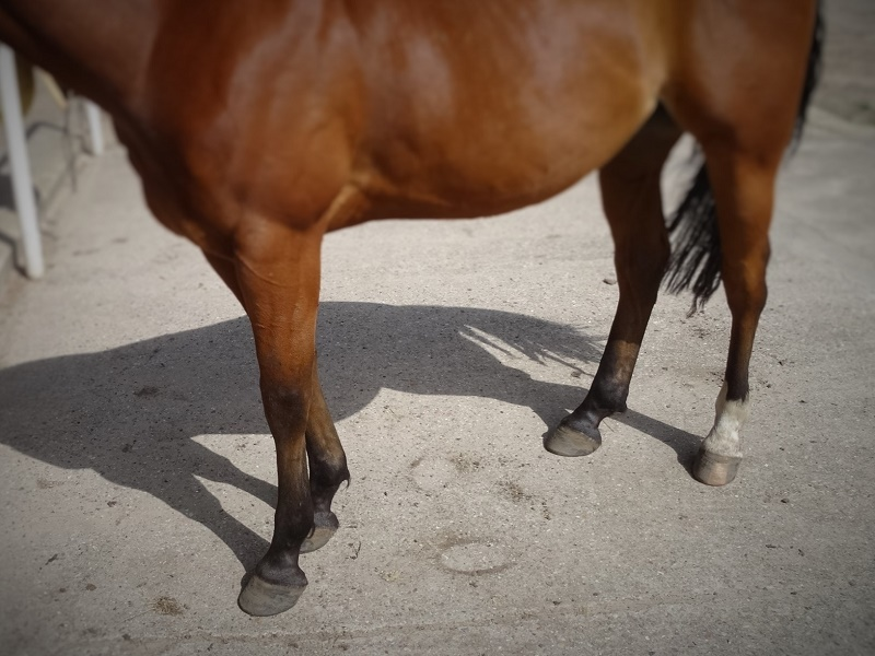 Hoof Care: hoof rehabilitation, three months later