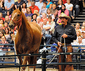 Horsemen: Pat Parelli selling horse-shows around the world