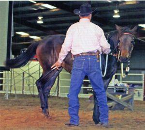 Horseman - John Lyons