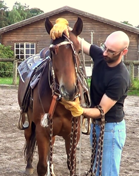Natural Horsemanship: how to bridle a horse