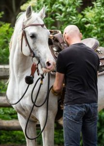 Natural Horsemanship: how to tighten gently the girth