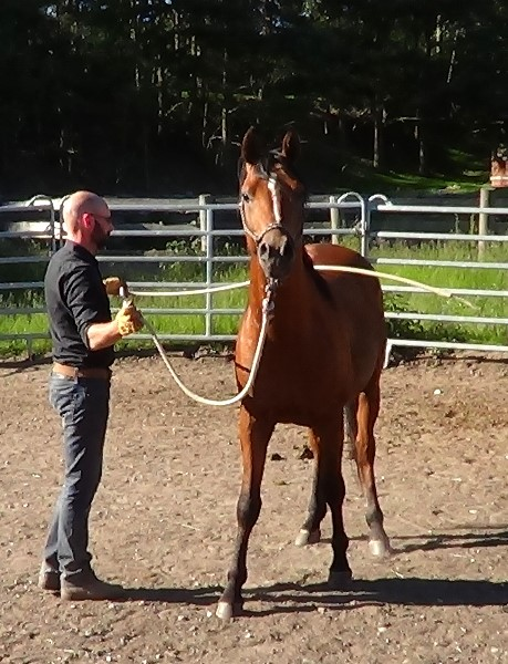 Natural Horsemanship: how to desensitize a horse to the lead rope