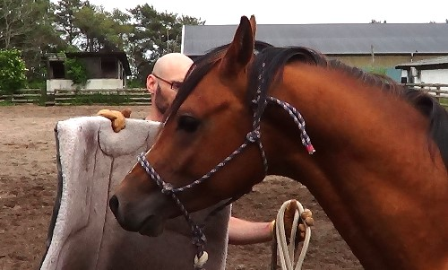 Natural Horsemanship: how to present the saddle pad or blanket