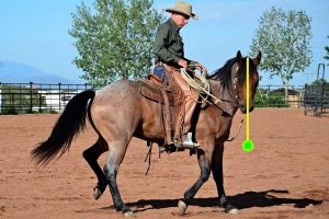 Natural Horsemanship: how to flex your horse laterally, by Buck Brannaman