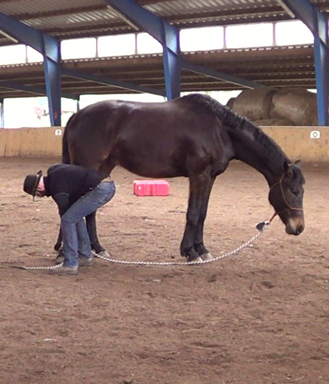 Natural Horsemanship: teaching a kicking horse to lift its feet