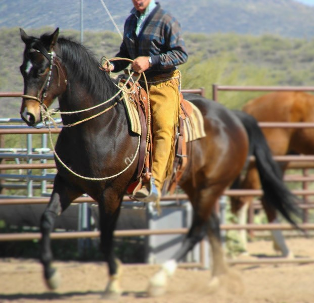 Journey to the bridle horse: the two-rein, bosalita and California bit