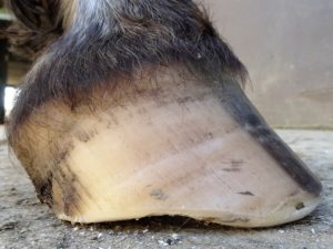 Right front hoof March 10 - Side